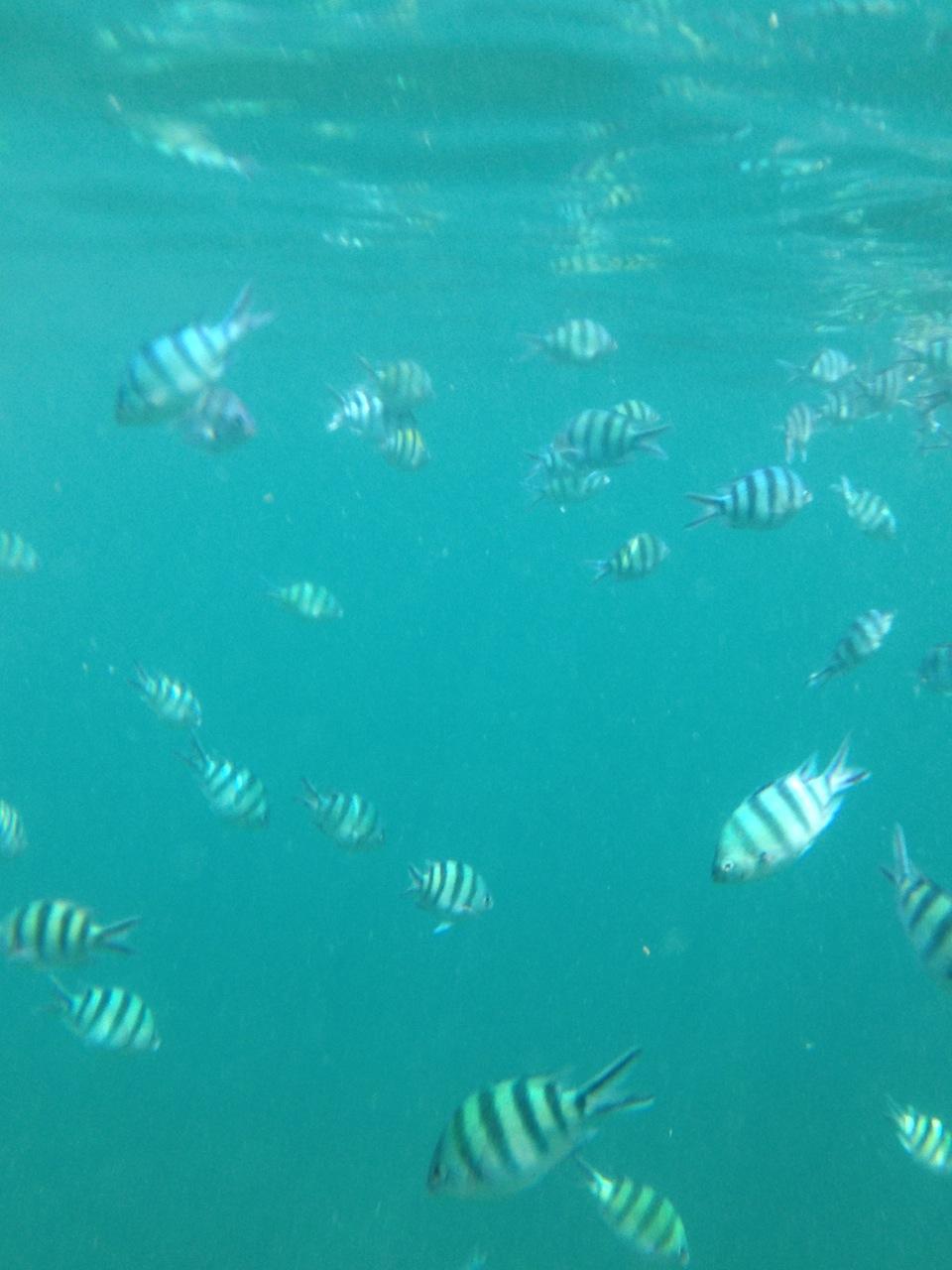 еще подводный мир