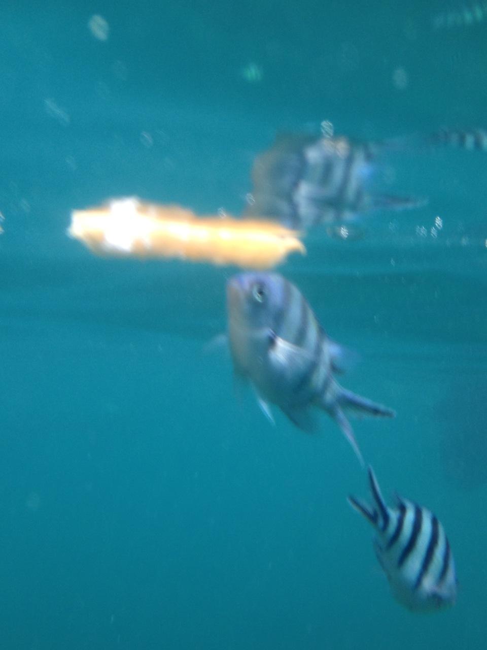 рыбки любят подплыть поближе