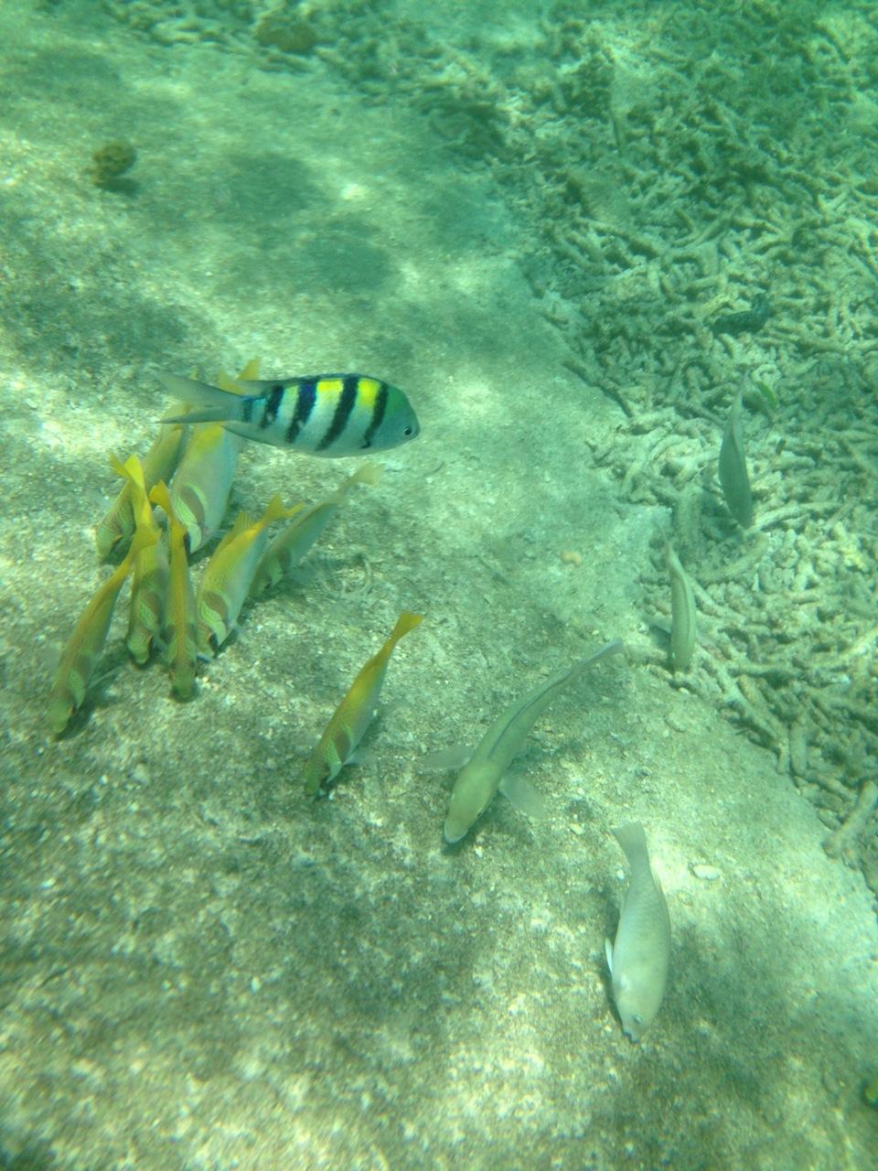 рыбки-рыбки