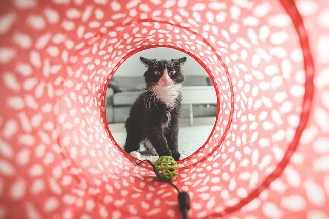 cat toys handmade